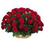 Корзины из роз - цветы и букеты на vambuket.com