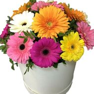 Gerberas in a round box - flowers and bouquets on vambuket.com