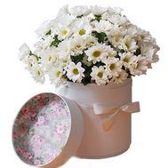Ромашковые хризантемы в коробке - цветы и букеты на vambuket.com