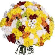 Огромный букет из 101 хризантемы - цветы и букеты на vambuket.com
