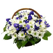 Basket of flowers from 12 chrysanthemums and 5 irises - flowers and bouquets on vambuket.com