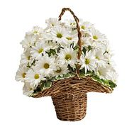 Basket of 7 daisy chrysanthemums - flowers and bouquets on vambuket.com
