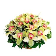 Basket of flowers from 19 orchid flowers - flowers and bouquets on vambuket.com