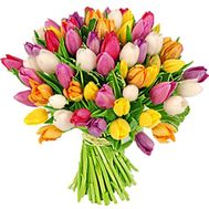 Bouquet of 75 multi-colored tulips - flowers and bouquets on vambuket.com