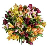 Bouquet of 29 multicolored alstromeries - flowers and bouquets on vambuket.com