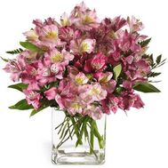 Bouquet of 15 alstromeries - flowers and bouquets on vambuket.com
