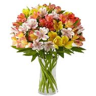 Bouquet of 19 multicolored alstromeries - flowers and bouquets on vambuket.com