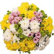 Bouquet of 23 chrysanthemums - flowers and bouquets on vambuket.com