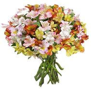 Bouquet of 35 multicolored alstromeries - flowers and bouquets on vambuket.com