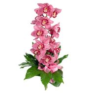 Bouquet of flowers from 1 branch of a pink orchid - flowers and bouquets on vambuket.com