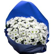 Bouquet of flowers from 11 chamomile chrysanthemums - flowers and bouquets on vambuket.com