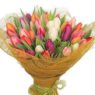 Bouquet of 101 tulips - flowers and bouquets on vambuket.com
