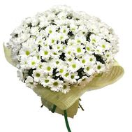Bouquet of flowers from 45 chamomile chrysanthemums - flowers and bouquets on vambuket.com