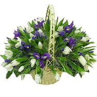 Basket of 45 tulips and 26 irises - flowers and bouquets on vambuket.com