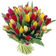 Bouquet of flowers from 55 multi-colored tulips - flowers and bouquets on vambuket.com