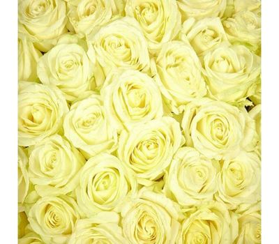 """""""Белые розы поштучно"""" в интернет-магазине цветов vambuket.com"""