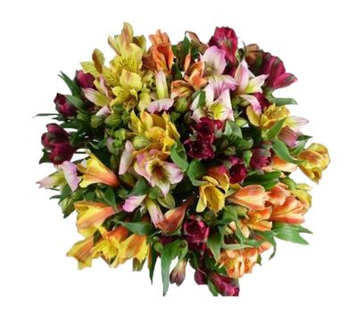 """Bouquet of 29 multicolored alstromeries"" in the online flower shop vambuket.com"