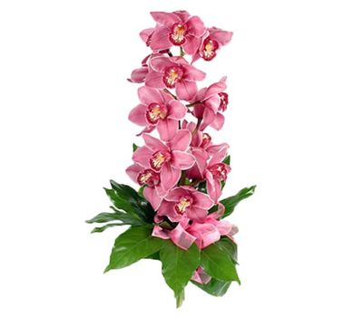 """""""Bouquet of flowers from 1 branch of a pink orchid"""" in the online flower shop vambuket.com"""