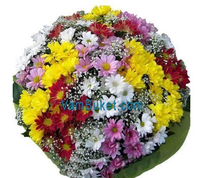 """Bouquet of 35 multi-colored chrysanthemums"" in the online flower shop vambuket.com"