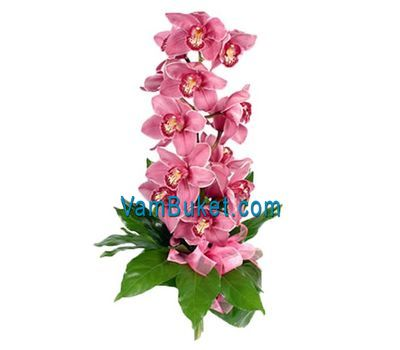 """Bouquet of flowers from 1 branch of a pink orchid"" in the online flower shop vambuket.com"