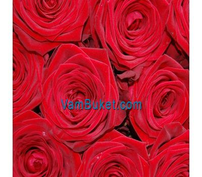 """""""Красные розы поштучно"""" в интернет-магазине цветов vambuket.com"""
